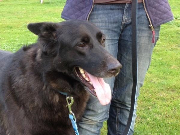 Dog Rescue Crostwick